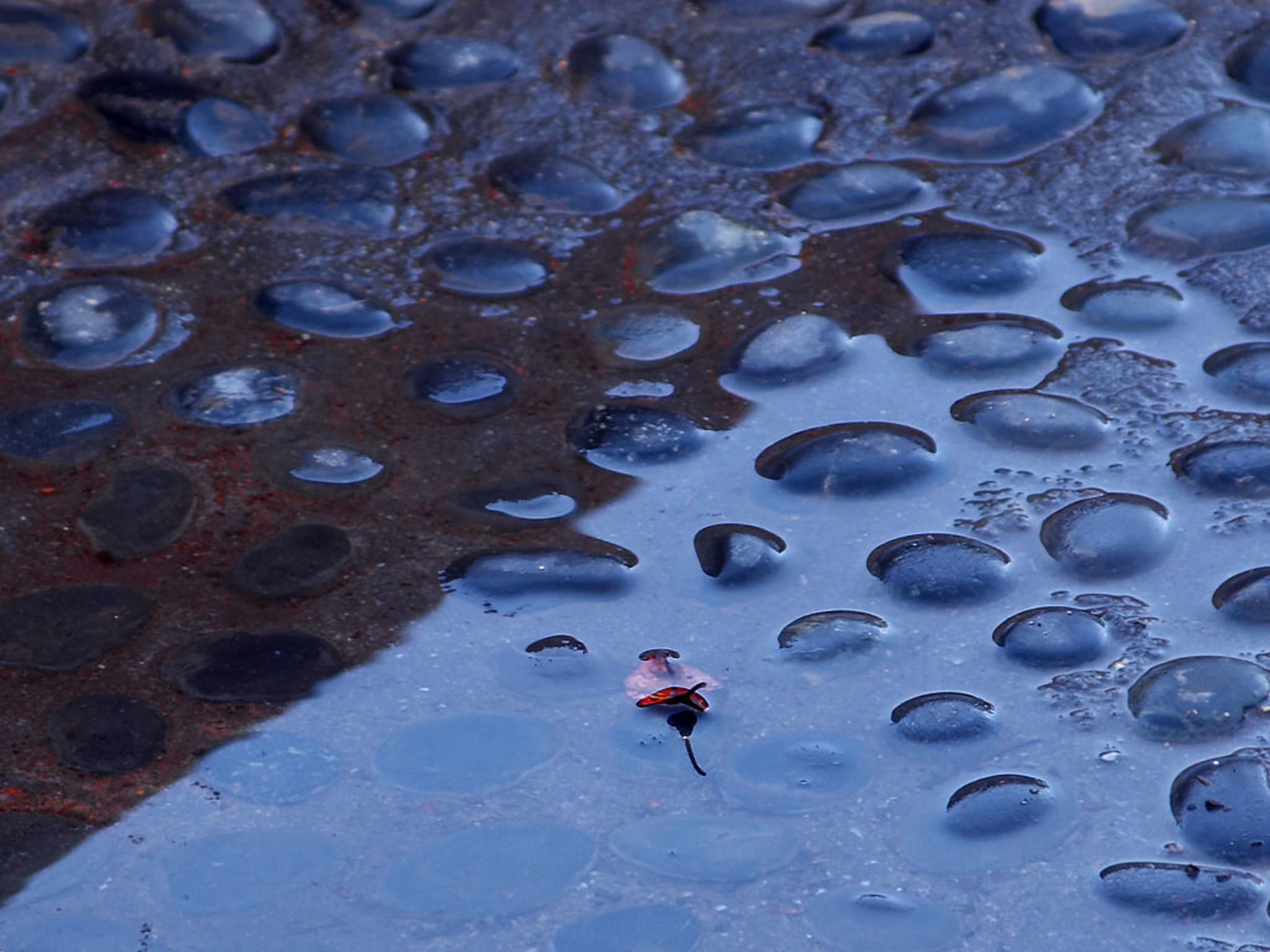 Rain puddle